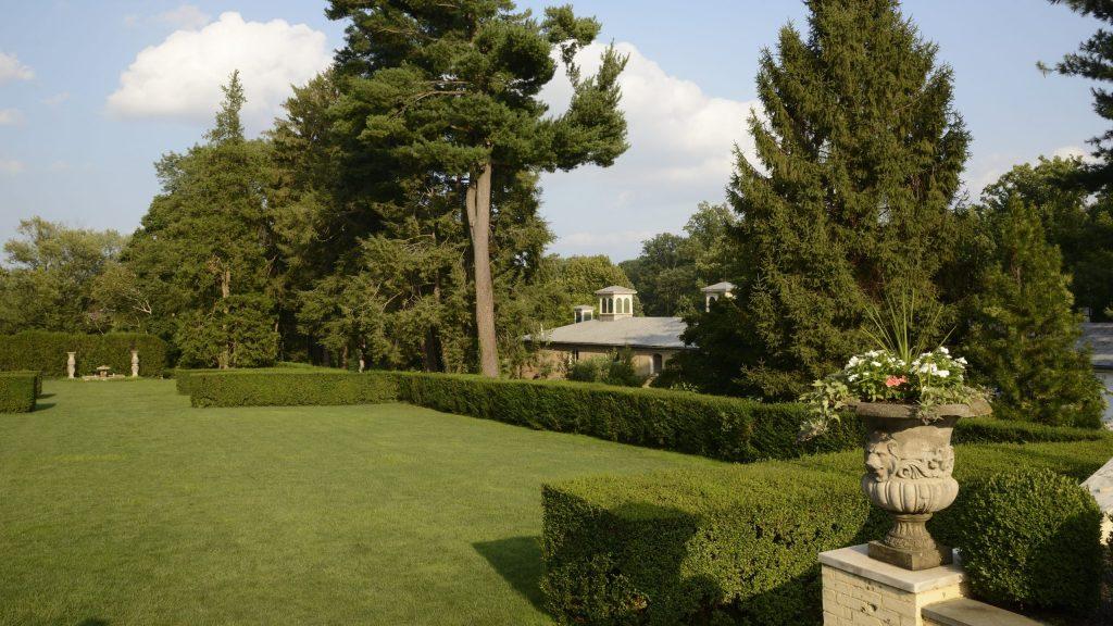 hedges in the garden